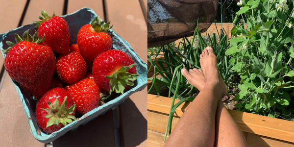 Fresh picked strawberries and putting my feet up in the yard